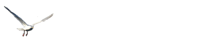 Pacific Breeze Tours footer logo